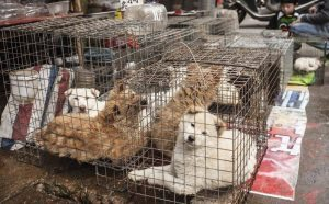 cani in gabbia